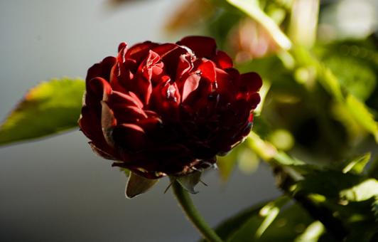 My shadow rose, my hidden